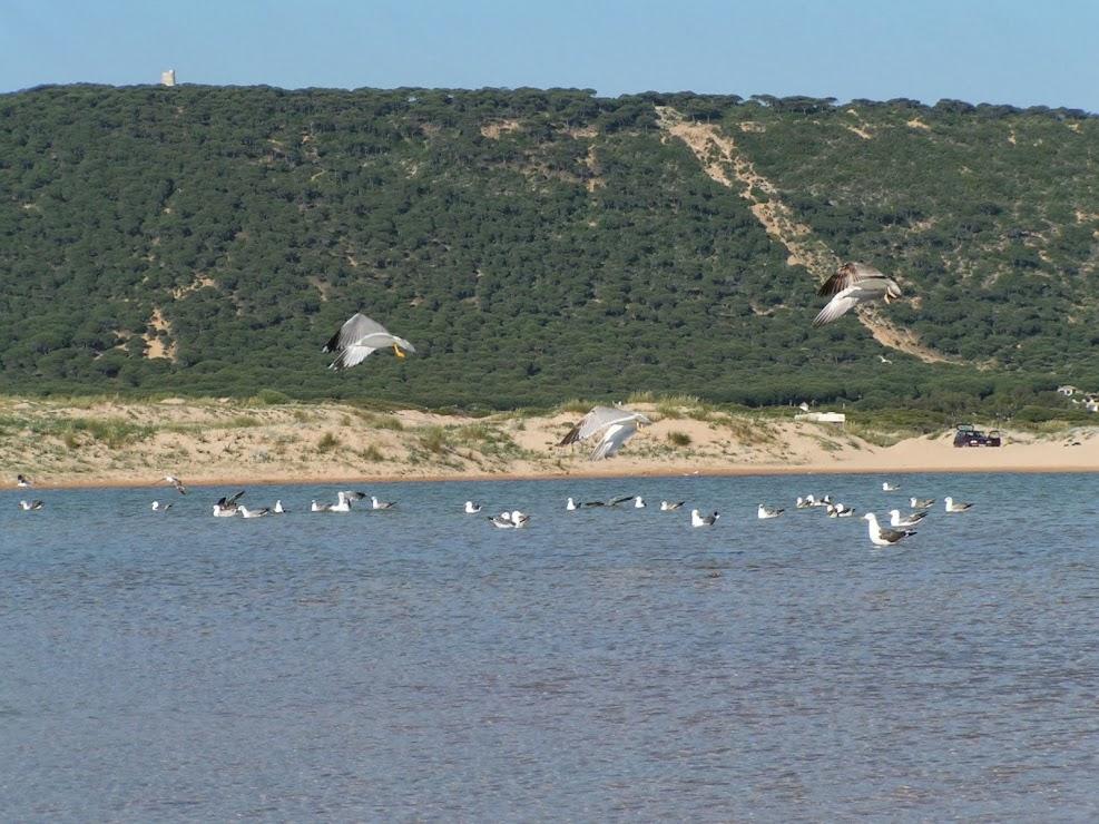 Parque Natural de la Breña y Marismas de Barbate